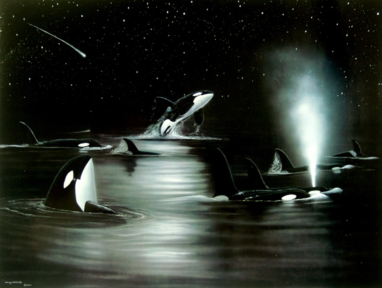 Orca's Starry Night
